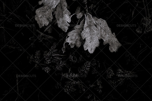 Black And White Frosty Closeup Of Leaves In Bush