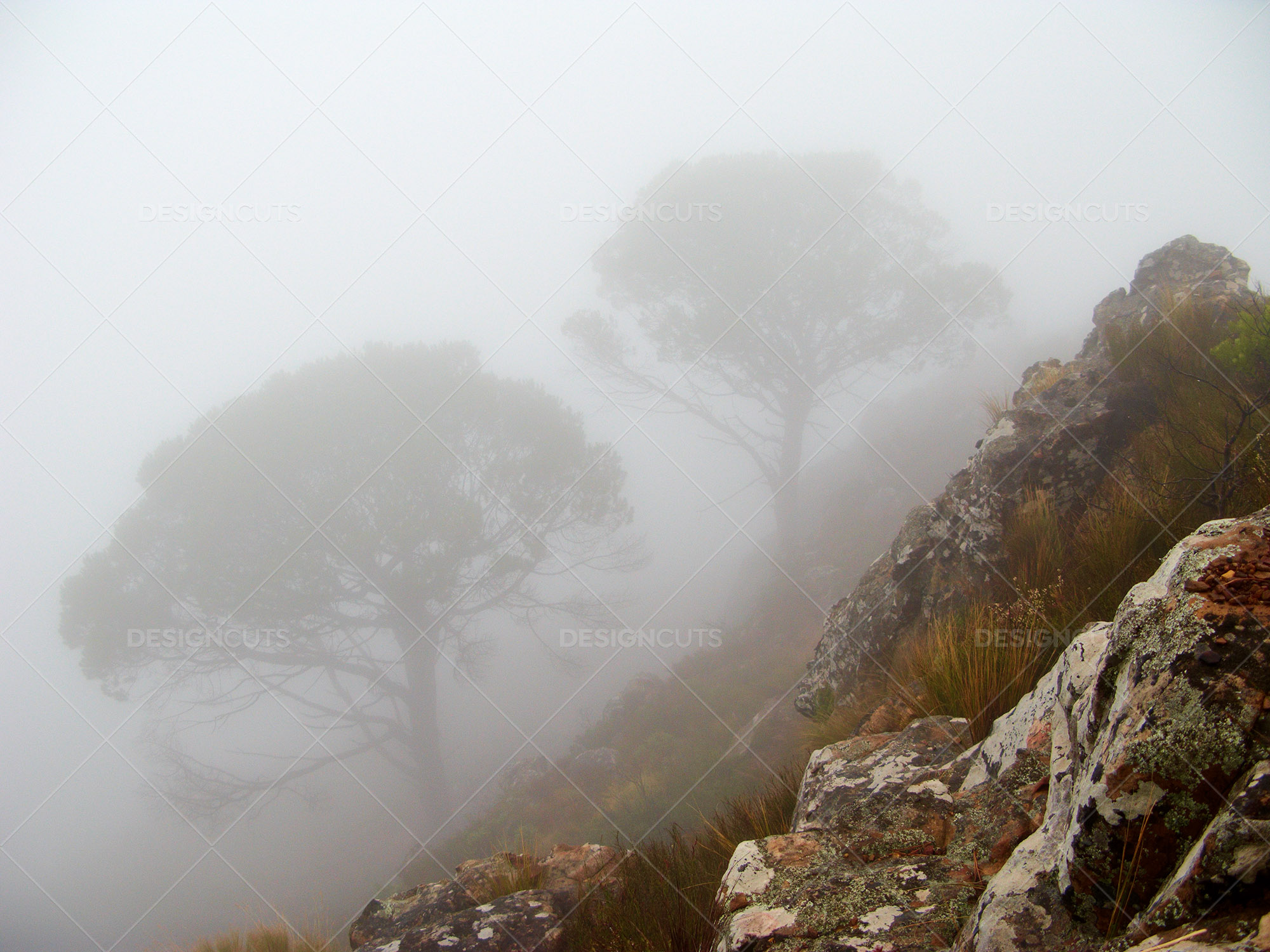 Rockface With Trees Covered By Mist In Background