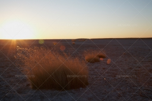 Open Desert Plain In Botswana At Sunset