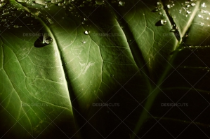 Still Life Close Up Of Water Droplets On Palm Leaf
