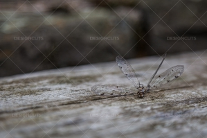 Closeup Of A Dead Dragonfly On A Piece Of Wood No. 2