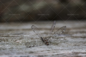 Closeup Of A Dead Dragonfly On A Piece Of Wood No. 4