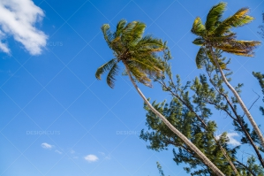 Palm Trees Under Crystal Blue Sky