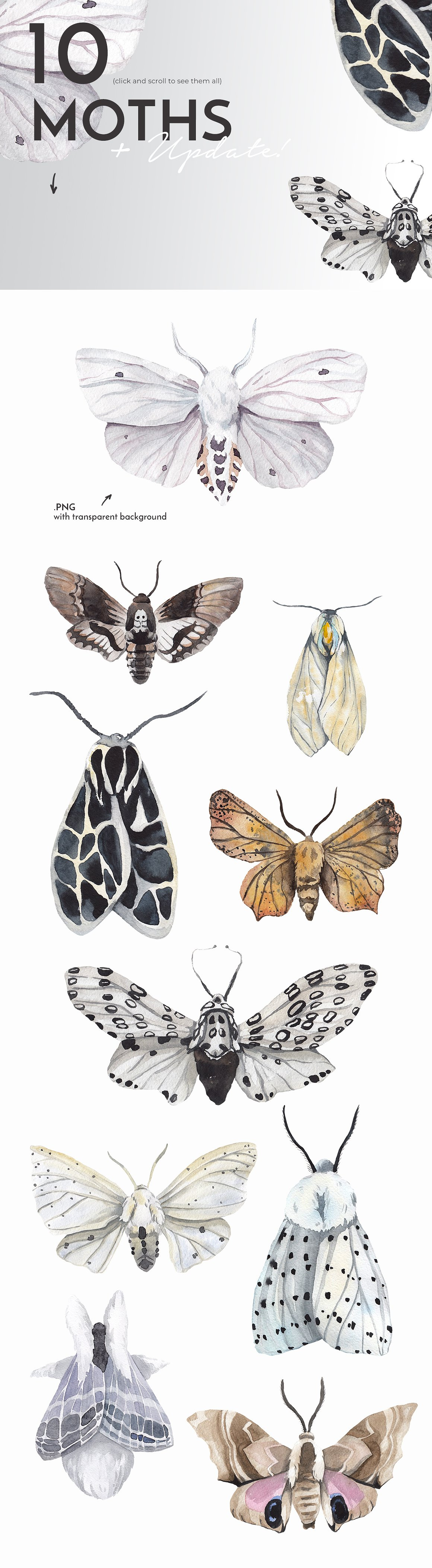 Moth Watercolor Butterflies Collection