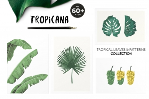Tropicana - Tropical Leaves & Patterns Collection