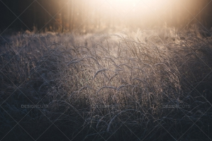 Grass Covered With Ice Crystals During Icy Winter Morning