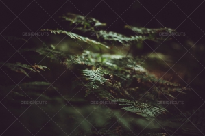 Green Leaves Of Ferns In Dark Forest