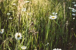 Green Spring Meadow With Flowers At Sunrise