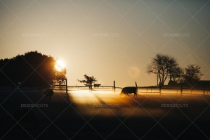 Silhouettes Of Grazing Cows On Pasture During Orange Sunrise