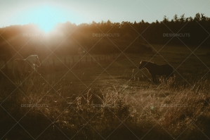 Two Horses Standing On Pasture Whilst The Sun is Setting
