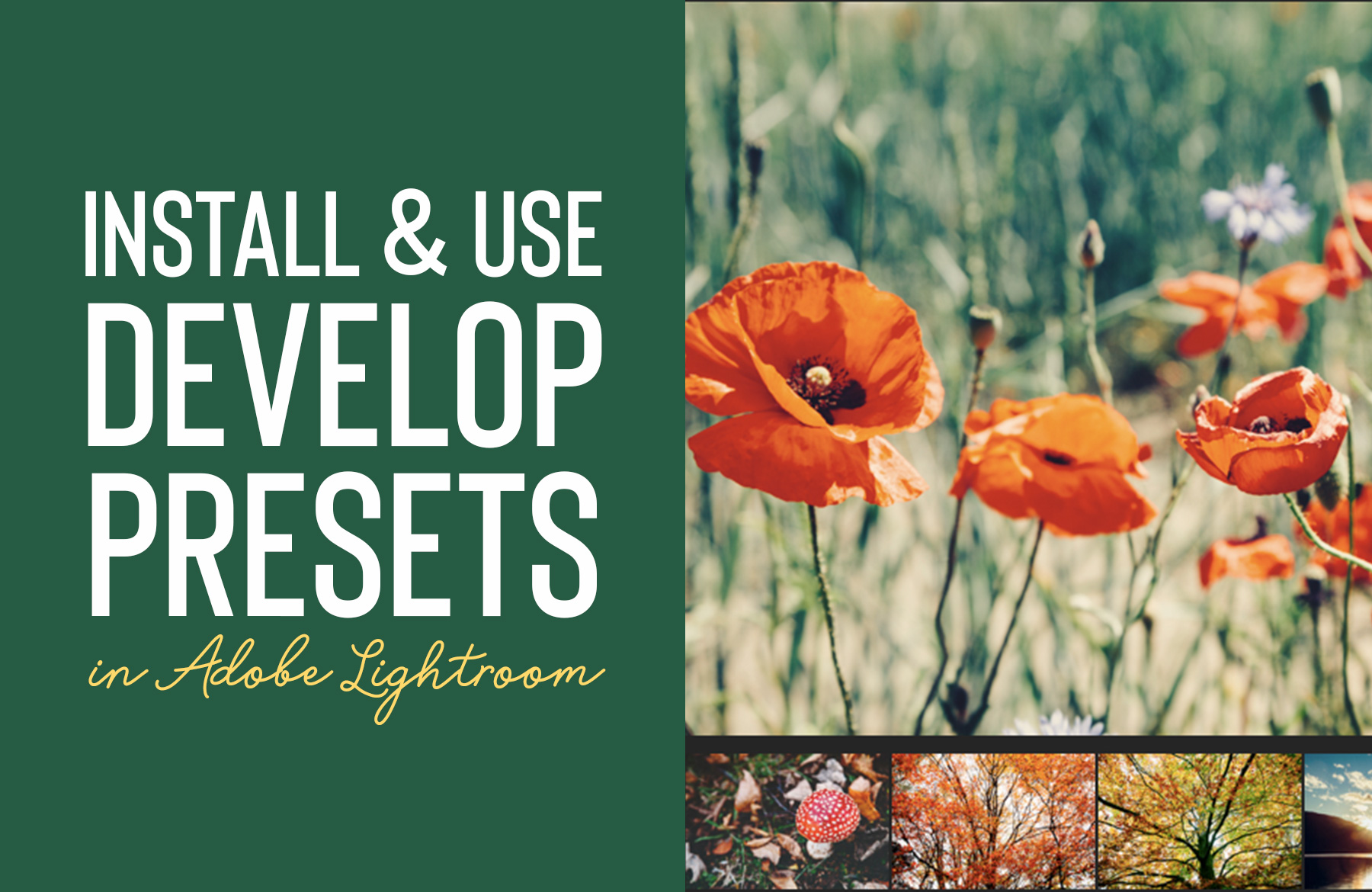 How to Install and Use 'Develop Presets' in Lightroom