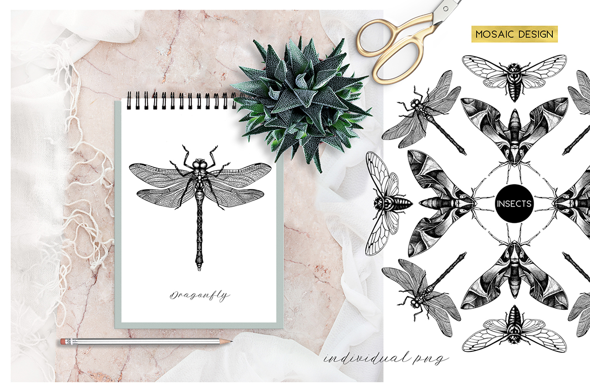 Insects Macro Drawings