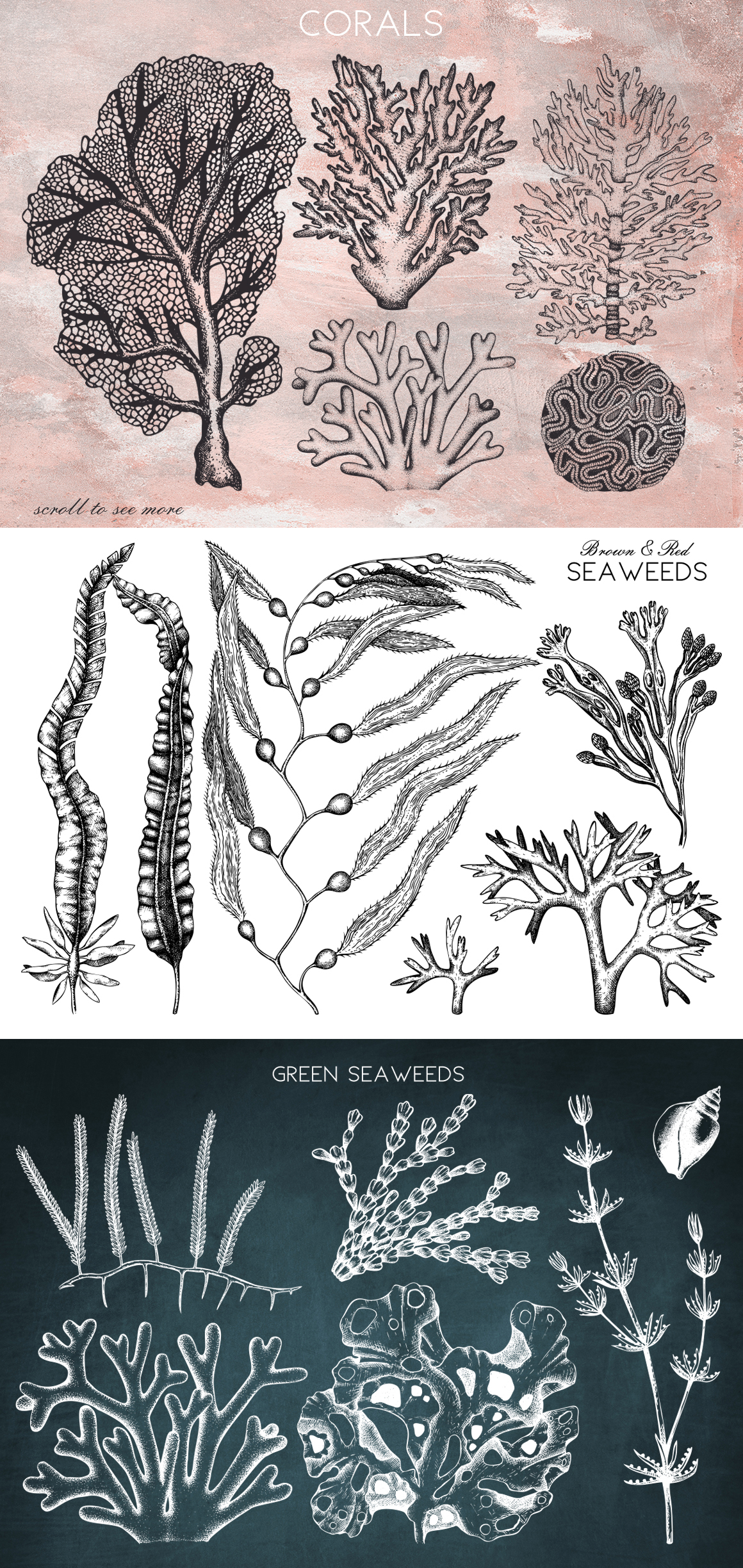 Vector Seaweeds Collection
