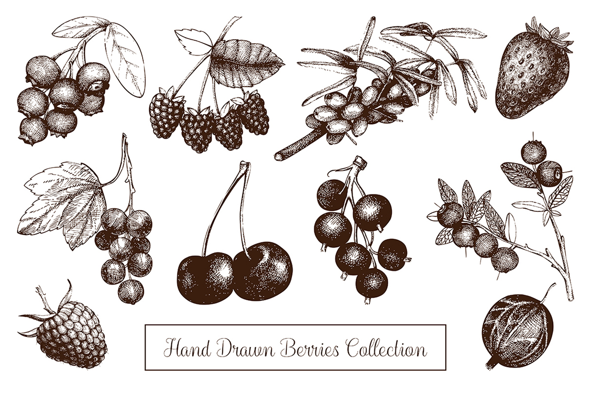 Hand Drawn Berries Collection