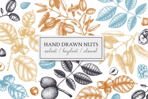 Hand Drawn Nuts Collection