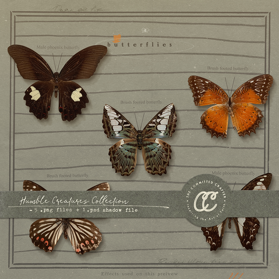 Humble Creatures Collection