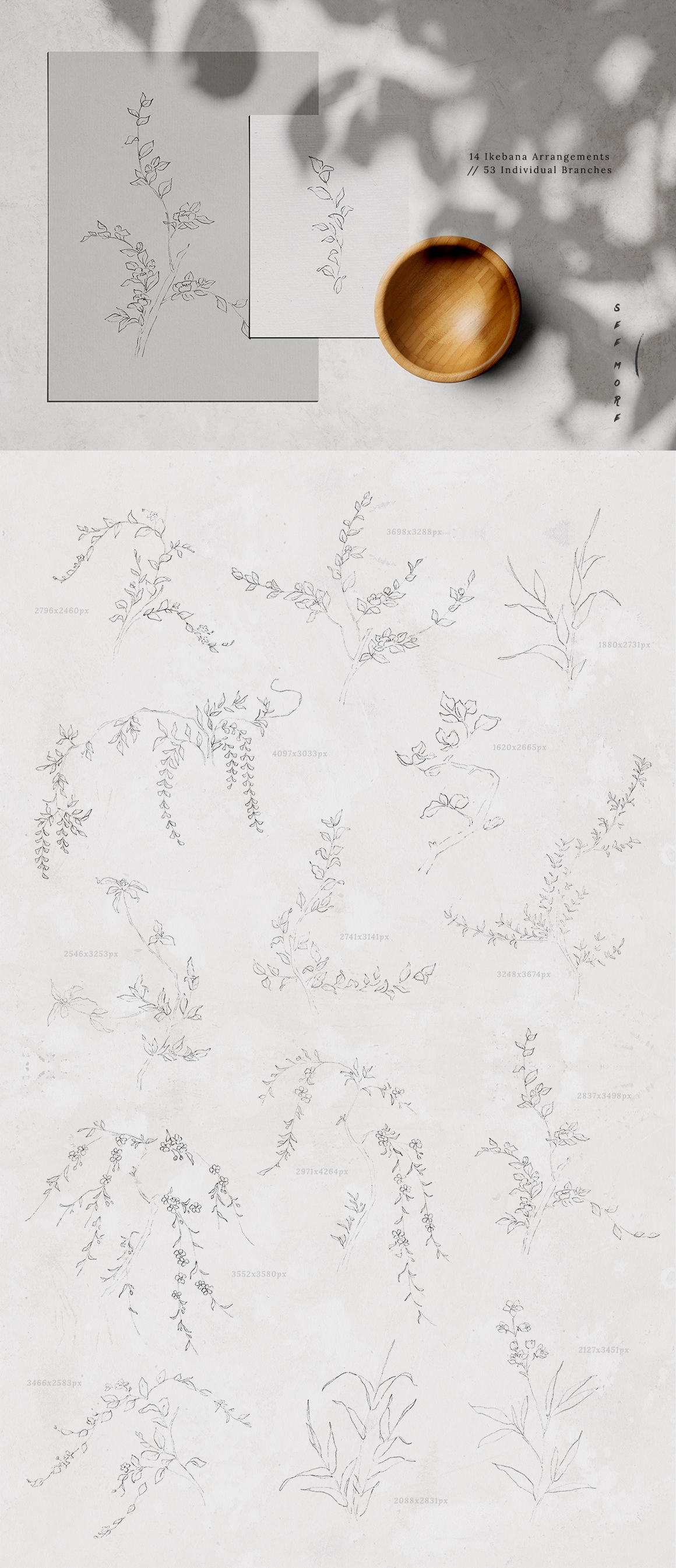 Ikebana Flower Illustrations