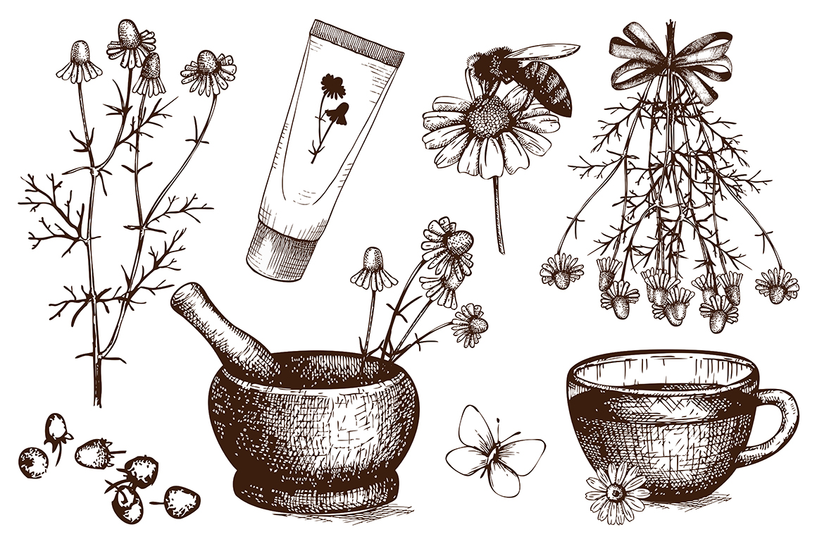 Vector Set Of Hand Drawn Camomile