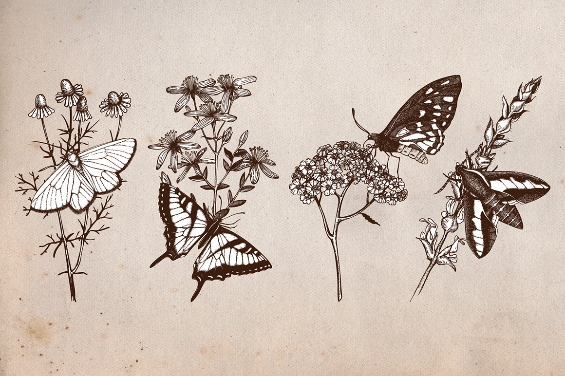 Vintage Butterflies Collection