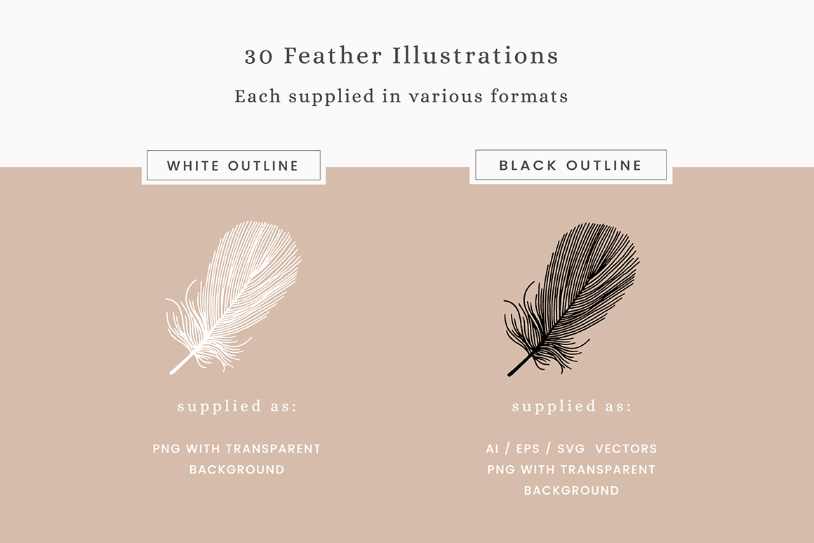 Feathers Vector Illustrations