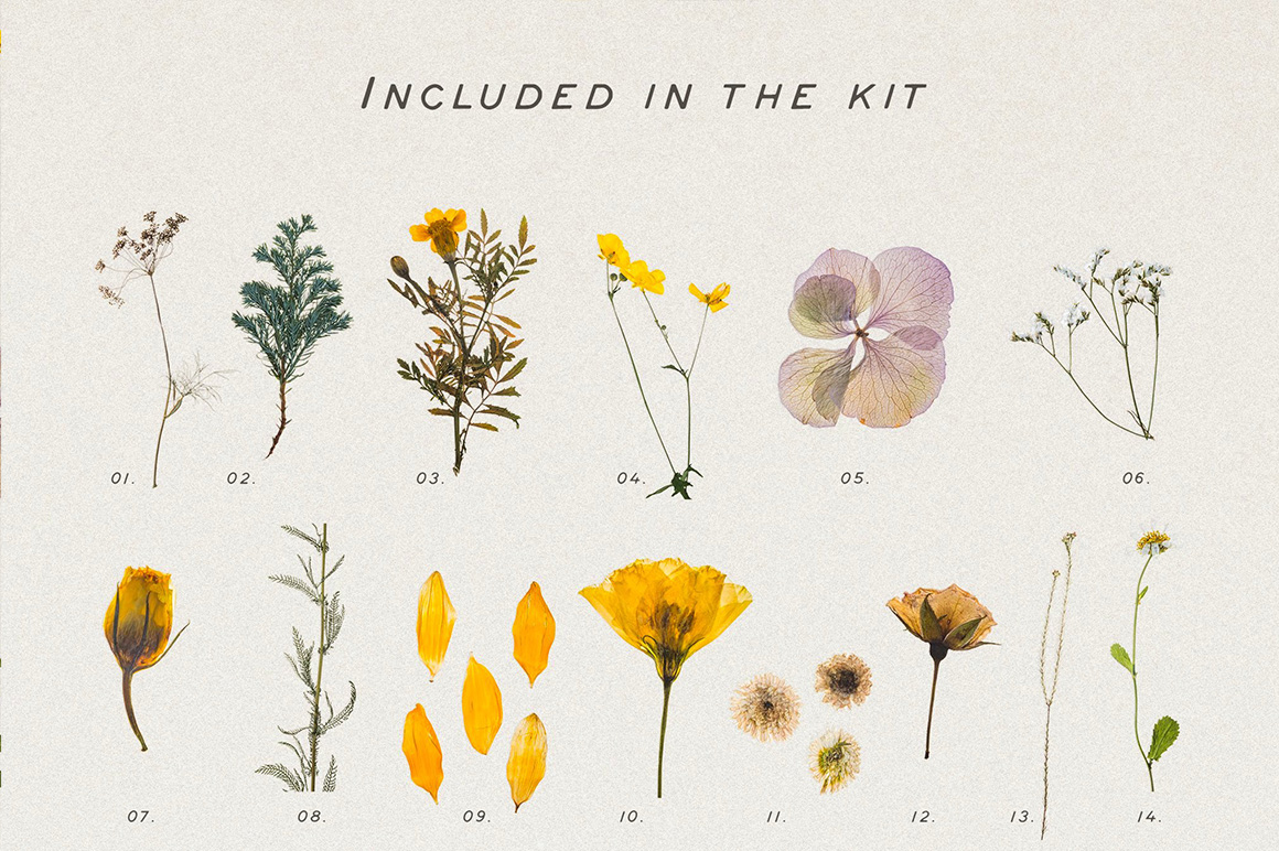 Pressed Dry Flowers & Herbs Vol.1