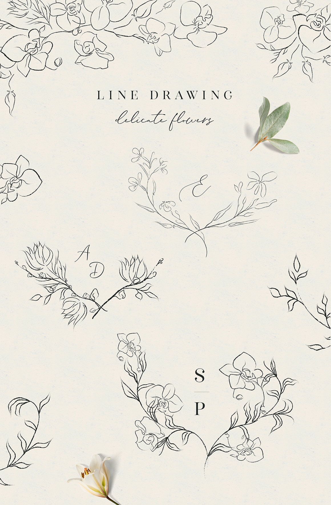 Line Clipart Hand Drawn Fine Art Orchid Flower