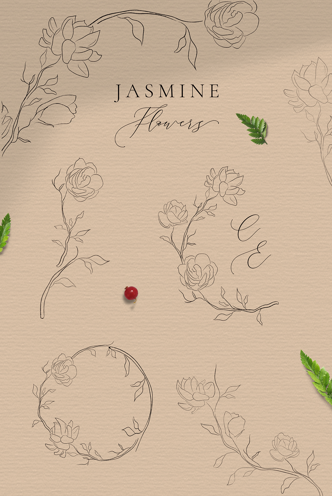 Jasmine Flowers Line Art Decorative Elements