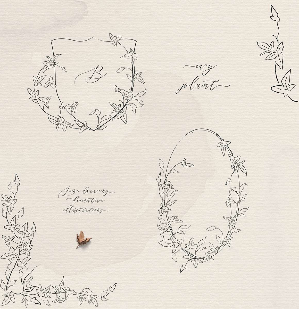 Line Drawing Delicate Ivy Plant Floral Frames