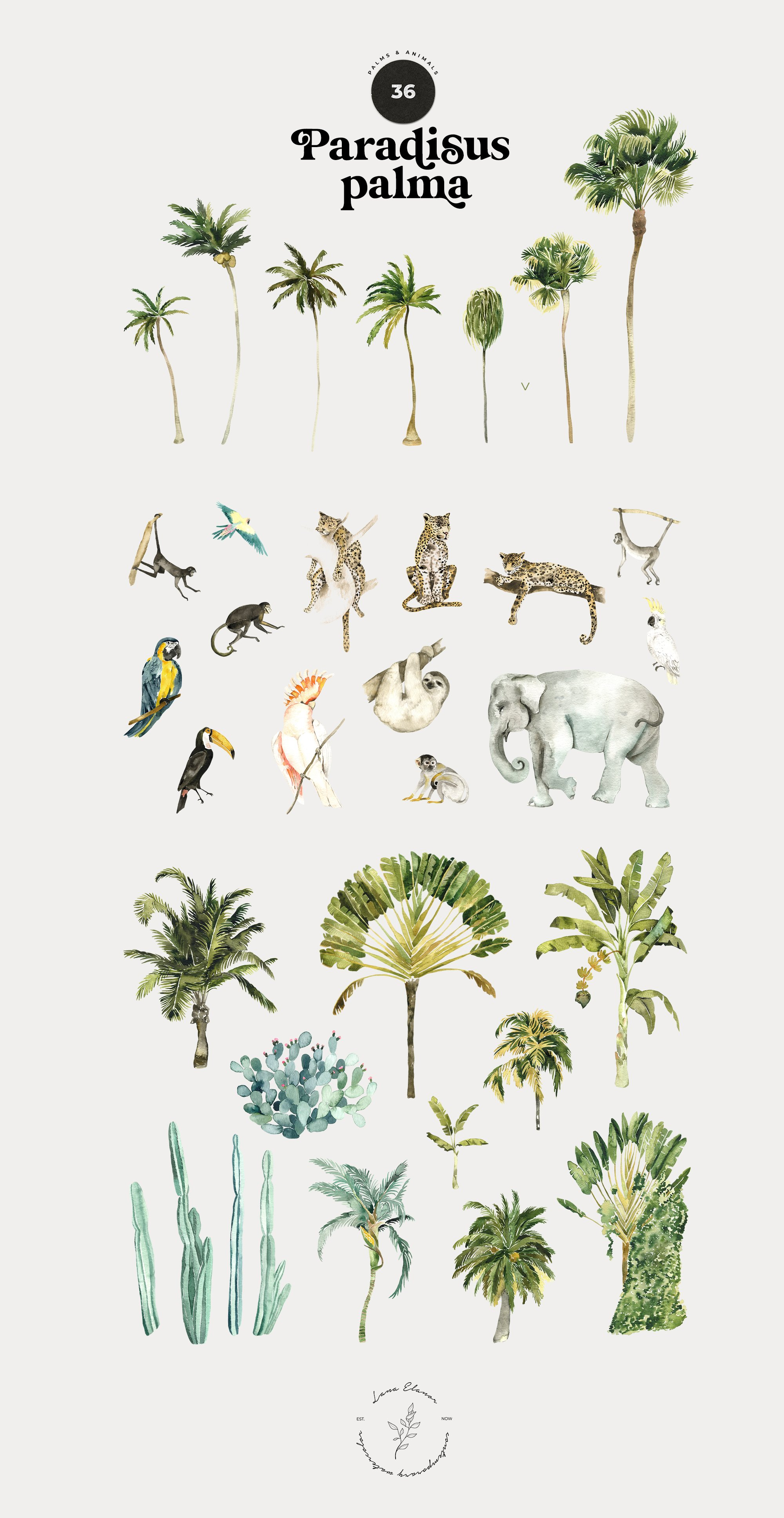 Paradisus Palma - Tropical Animals & Patterns