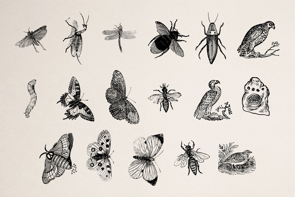 Animals of Air, Land & Water Illustrations