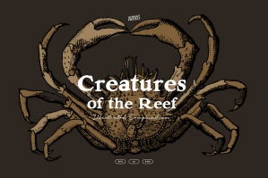 Creatures of the Reef Illustrations