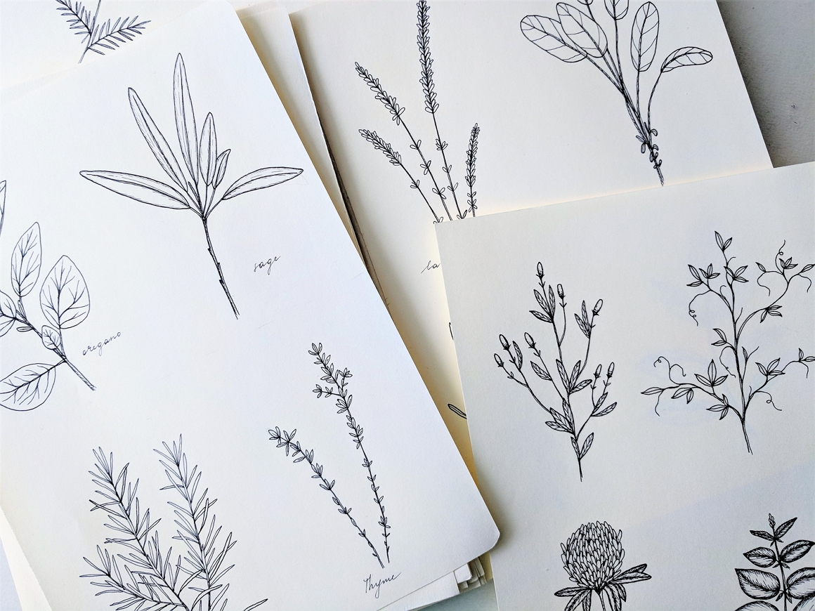 Hand-Drawn Herbs Collection