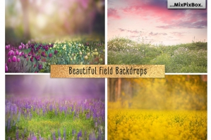 Beautiful Field Backdrops