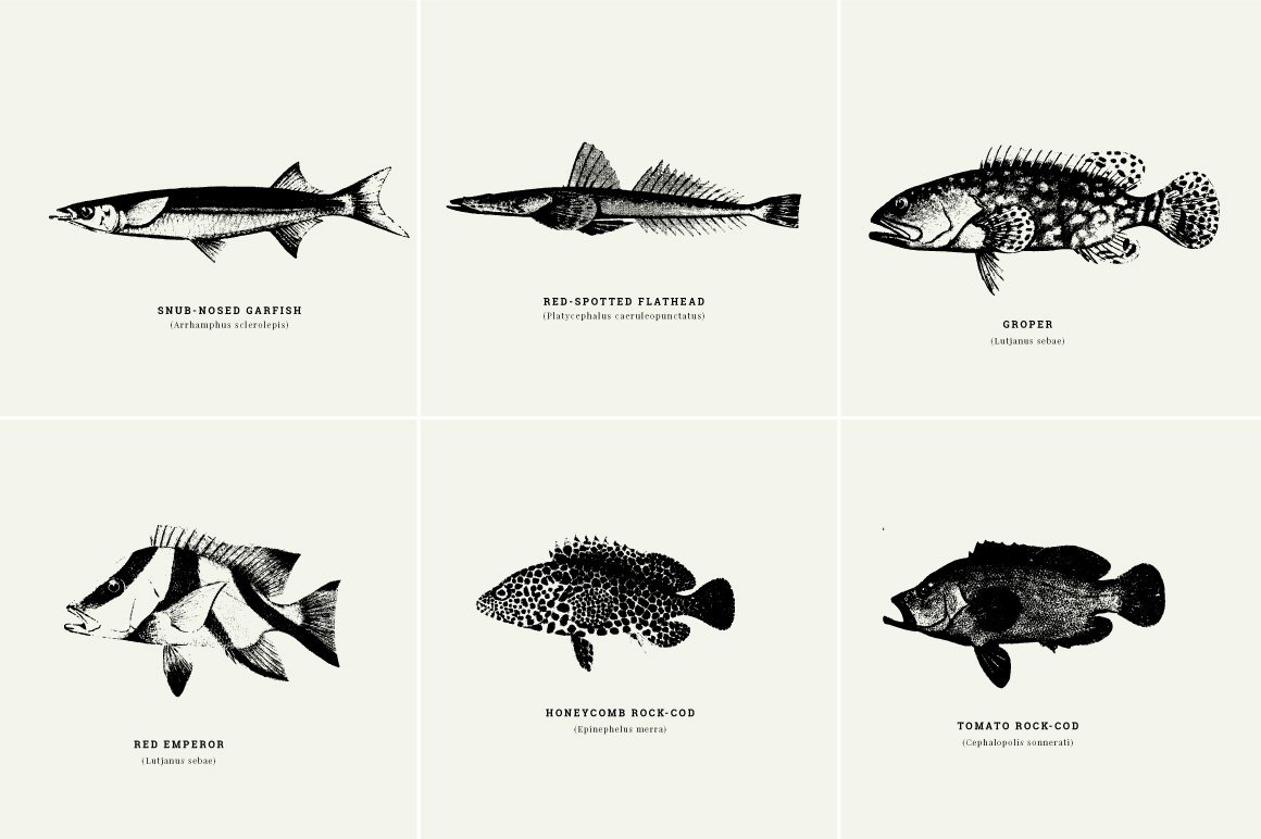 Fishes Illustrations
