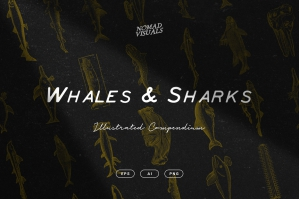 Whales and Sharks Illustrations
