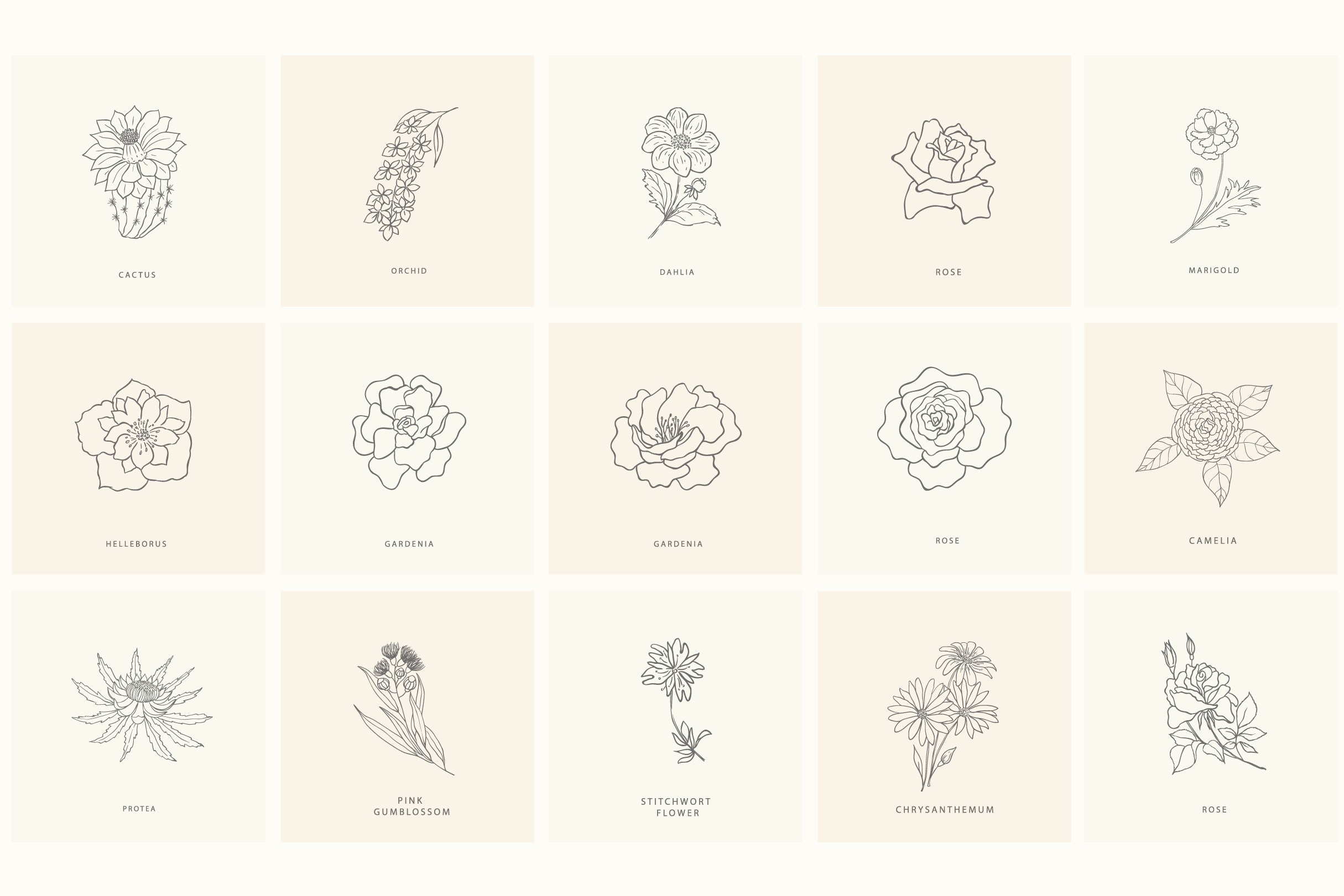 Birth-Flowers. Trendy Plants & Logos Line Art