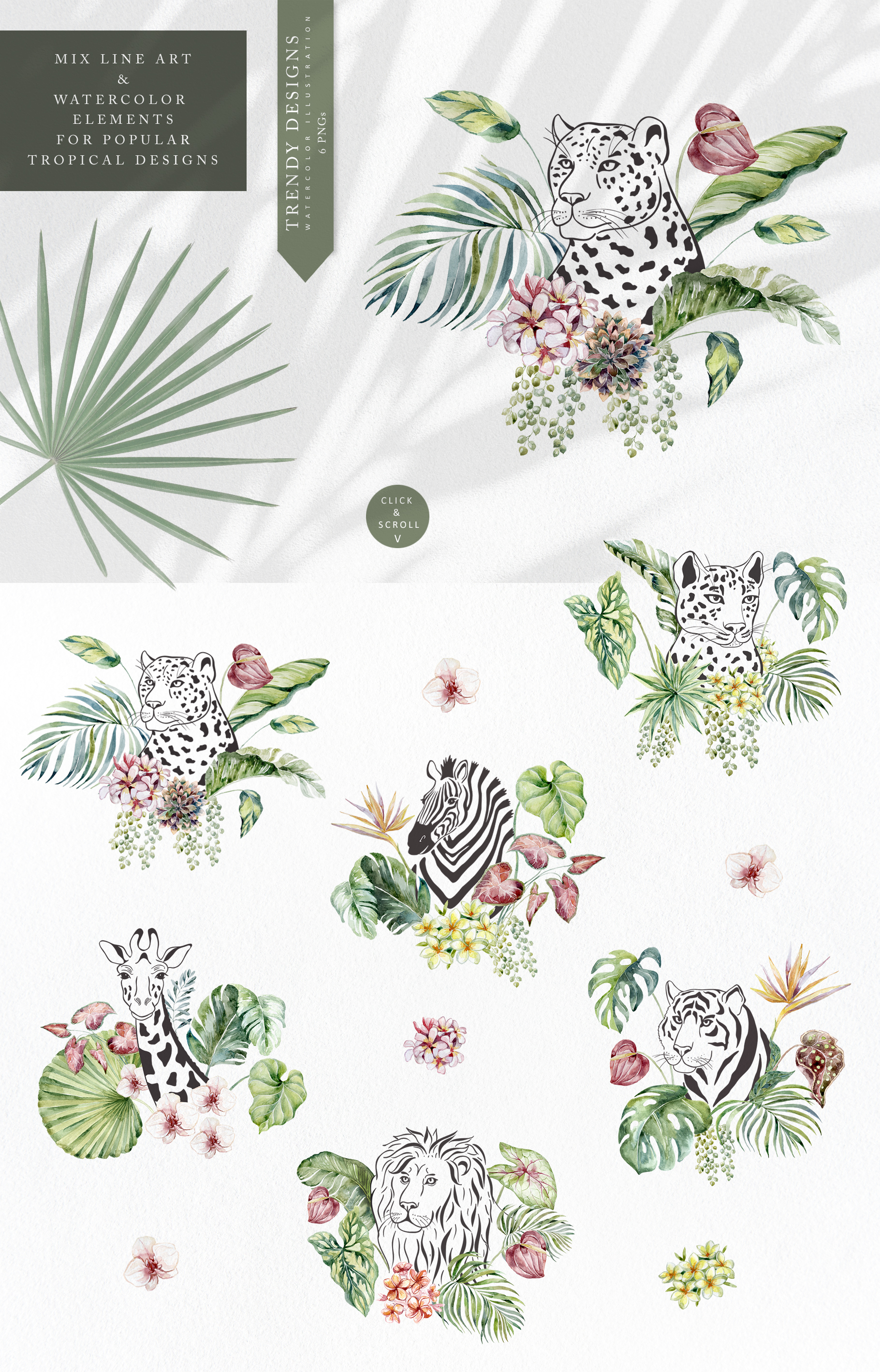 Jungle Flowers, Plants & Animals. Frames & Pattern