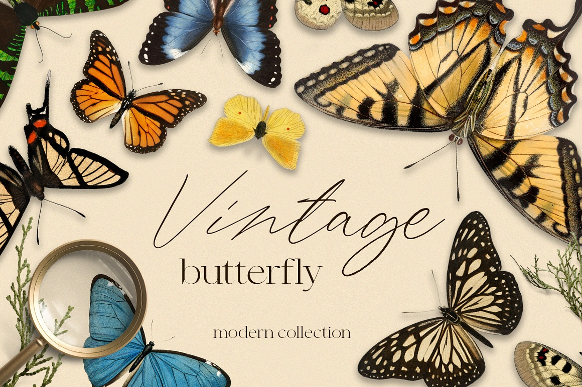 Vintage Butterfly Modern Collection