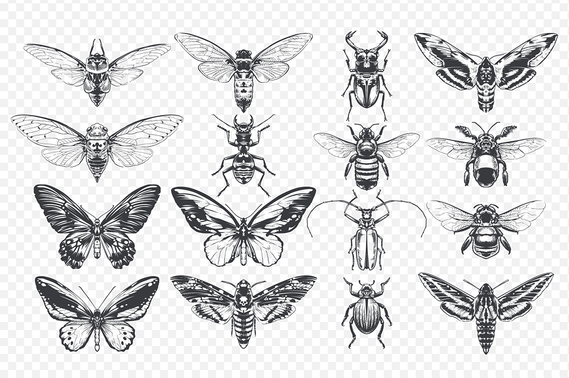 Vintage Insects Vector Set