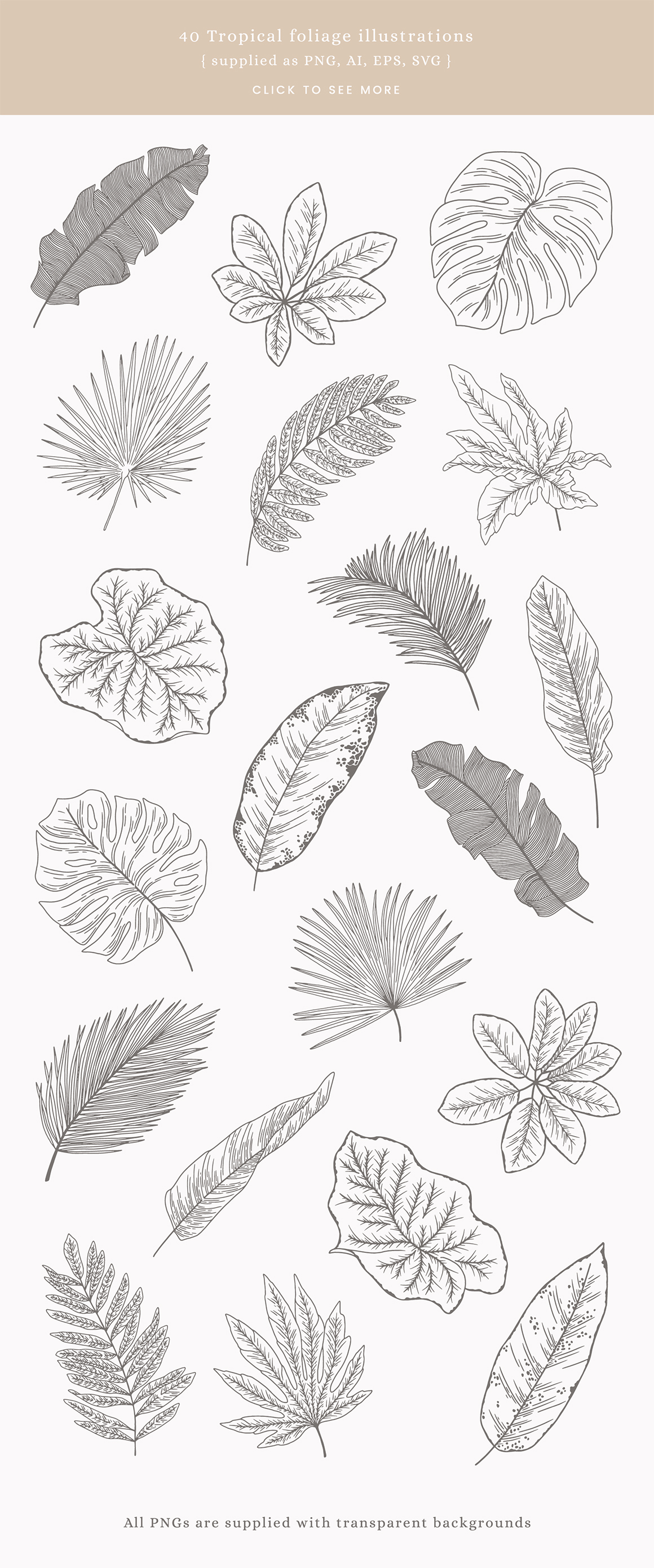 Tropical Leaves Vector Illustrations
