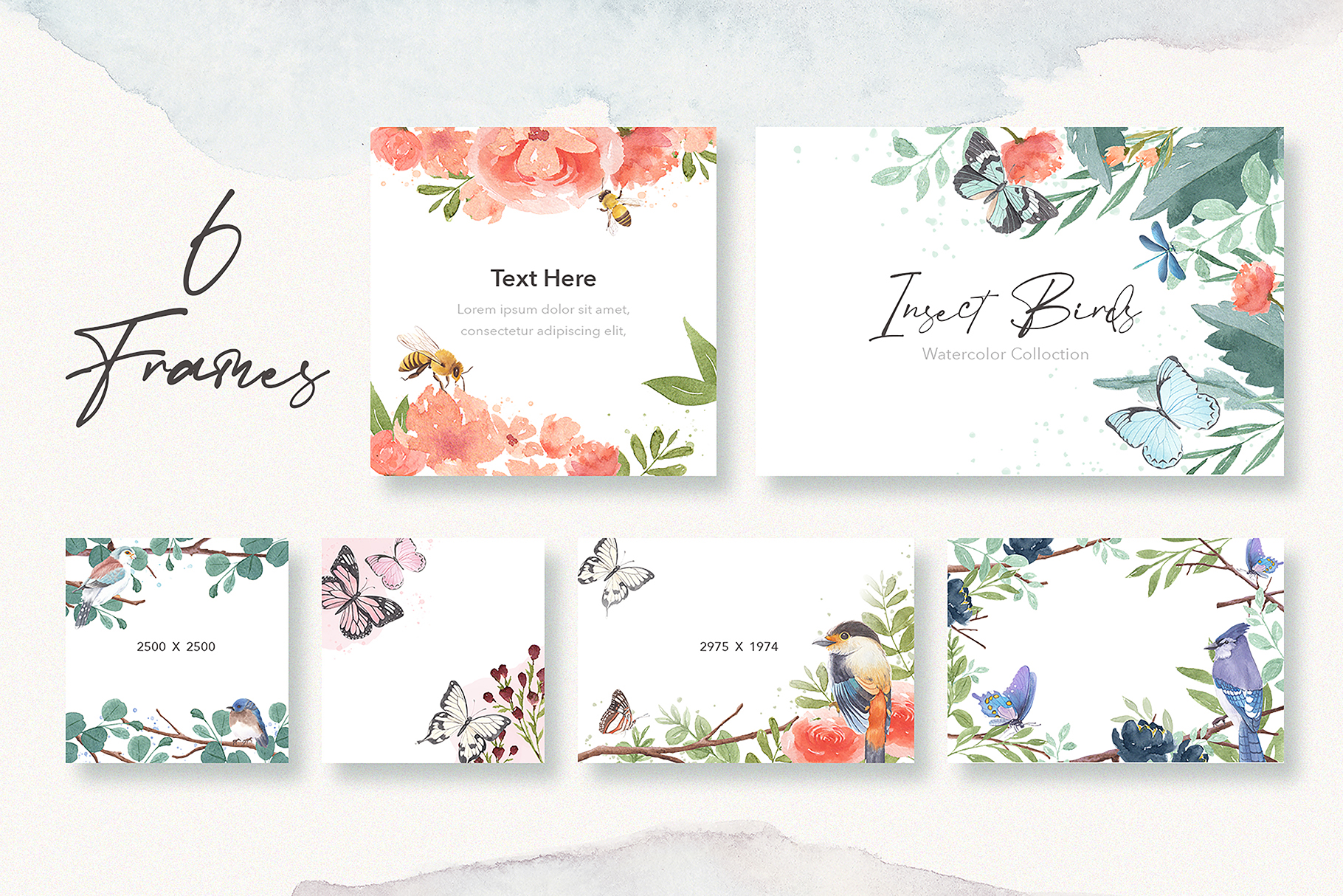 Insects & Birds Watercolor Collection